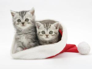 cats_a1b3dda1