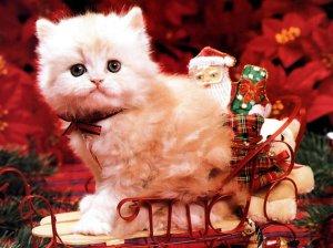 Christmas-Kitten-christmas-2736116-1024-768