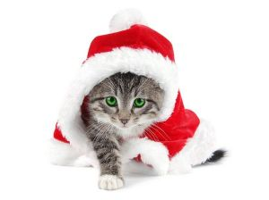 Christmas_tabby kitten in a Santa hat 09